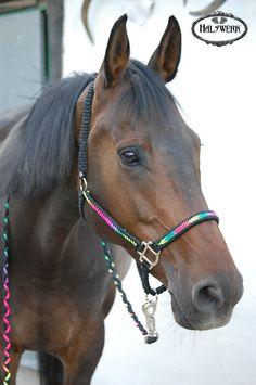Geflochtenes Pferde Halfter aus Paracord. Mehr auf Halswerk.de