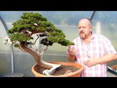 Copy of Bonsai Styling - Beautiful Yamadori Juniper by Graham Potter - YouTube