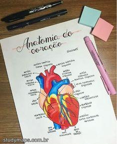 Body Anatomy, Anatomy Study, Biomedical Science, Exams Tips, Study Organization, Study Techniques, Bullet Journal School, Medical Anatomy, Med Student
