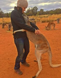 This kangaroo has been hugging its rescuers every day for 10 years - Abigail was saved and transported to the Alice Springs Reserve when she was only 5 months old. Every day, she shows that she remembers the people's kindness with hugs.