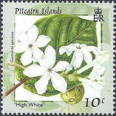 Bbeach gardenia (Guettarda speciosa) , (Flowers of Pitcairn Islands) . Postage Stamp Art, Pitcairn Islands, Going Postal, Postcard Art, Love Stamps, Flower Stamp, Vintage Stamps, Small Art, Fauna