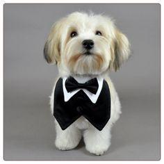 Dog Clothing Black Formal Dog Vest and Black Bowtie Dog Tuxedo, Tuxedo Vest, Black Tuxedo, Black Vest, Designer Dog Clothes, Dog Clothes Patterns, Dog Vest, Puppy Clothes, Dog Pattern