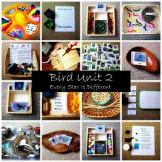 Every Star Is Different: Bird Unit 2 w/ Free Printables