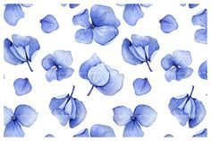 Seamless hydrangea watercolor by Anna Myslivets on @creativemarket