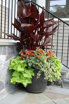 Canna coleus lantana ipomea vinca full sun # balcony garden # balcony garden # f… - Modern Canna Lily Landscaping, Tropical Landscaping, Landscaping Tips, Container Flowers, Container Plants, Container Gardening, Outdoor Planters, Garden Planters, Balcony Garden