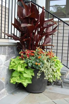 Canna lilies come in a variety of colors for the foliage and flowers, and also in various heights. An easy plant for the first-time gardener or people like me without green thumbs. landscape by Mary-Liz Campbell Landscape Design