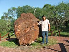 """METEORITO Campo del Cielo es una extensa región de Argentina ubicada en el Chaco Austral, más exactamente en los confines entre las provincias de Chaco, Santiago del Estero y el extremo noroeste de la provincia de Santa Fe. Su nombre proviene de una """"lluvia"""" de meteoritos acaecida hace unos 4000 años ya durante el holoceno medio. El área (con límites naturales imprecisos) de Campo del Cielo es de aproximadamente 20 000 km²."""