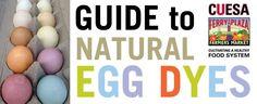 Make Easter egg dye using farmers market ingredients: http://cuesa.org/article/guide-natural-egg-dyes