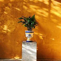 Flavia Balan Travel Story ( Alcazar Of Seville Detailes Alcazar Seville, Minimal Decor, Light And Shadow, Planter Pots, Architecture, Photos, Travel, Beautiful, Instagram