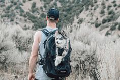Dogs are good everywhere, but they're best outside. 💙 Dog Backpack, Hiking Dogs, Commute To Work, Pet Travel, Dog Carrier, Pet Carriers, Small Dogs, Dog Training, Best Dogs