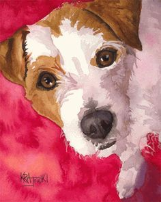 Jack Russell Terrier 012606