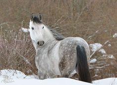 Orlov Trotter - Winter