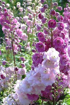 Plants to make an English country style garden - Delphinia ali . - Plants to make an English country style garden – Delphinia aka Delphinium – - Cottage Garden Design, Cottage Garden Plants, Cottage Patio, Succulent Planters, Hanging Planters, Succulents Garden, House Plants, Magenta Flowers, Beautiful Flowers