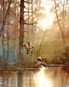 Landscape  series 3 - Watercolor Painting Archival Print - Watercolor Landscape, Wildlife, Waterfowl,  Ducks, Birds