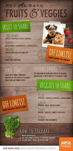 Pet Safe Fruits and Vegetables | #infographic