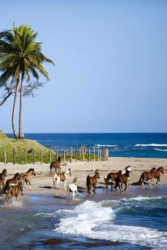 #7 - Dominican Republic: Punta Cana Flight time from Miami: 2 hours, 20 minutes Cheapest airfare (when we checked): $593