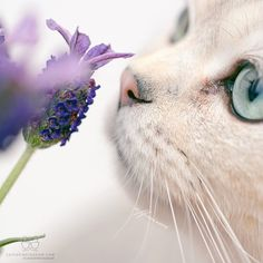 LavenderHeart