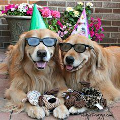 Les anniversaires, ça se fête ! #birthdayparty #dog #chien