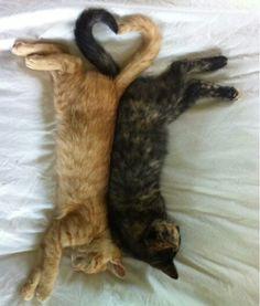 son dos gatitos uno es anaranjado y otro es negro y estan asiendo un corason con sus colas