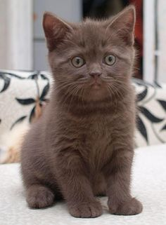 """The smallest feline is a masterpiece."" --Leonardo DaVinci"