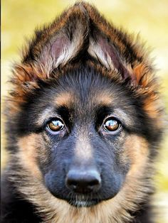 The ears are listening to hear if he's a good boy http://ift.tt/2m0layi