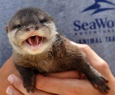 Hello Sea World!