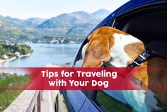 Traveling with your dog in the near future? In this article, we share our top tips for making your dog (and you) comfortable and safe when traveling. Read more here http://blog.4knines.com/traveling-with-dogs/tips-traveling-with-your-dog-breeze/