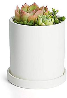 3 Inch Cylindrical Ceramic Planter for Cactus with Drainage Hole Greenaholics Succulent Plant Pots Set of 3 Bamboo Trays Succulent Planting Inverted Triangle