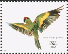 Thick-billed Parrot Postage Stamp