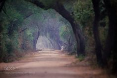 http://ift.tt/2jr6Zkd #Nature_breathtaking #Photos Jungle road. by sanchosgphotos