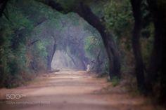 http://ift.tt/2jr6Zkd #Nature_breathtaking #Photos Jungle road. by sanchosgphotos