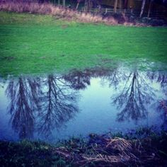 Puddle tree reflections