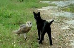 The Owl And The Pussy Cat  ... from PetsLady.com ... The FUN site for Animal Lovers