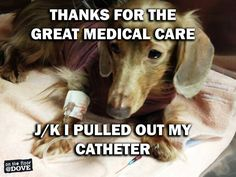 DoveLewis provides real training for every member of your veterinary staff. Veterinary Memes, Veterinary World, Veterinary Medicine, Veterinary Technician, Veterinarian Quotes, Veterinarian Office, Vet Assistant, Pet Vet, Anatole France