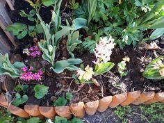 Tavaszi hagymások Kertészanyu kertjéből