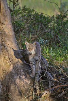 "h4ilstorm: "" Tree Cat (by toryjk) """