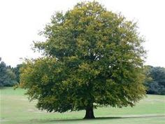 pictures of trees - Bing Images Picture Tree, Lawn Equipment, Tree Images, Leaf Coloring, Can You Be, Flowers Perennials, Lawn Care, Colorful Flowers, Hug