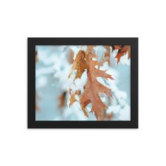 Framed poster of yellow leaves in snow - Winter in Canada - Toronto photographer - Framed Photo Print - Home Decor - Wall Art Toronto Photographers, Golden Leaves, Yellow Leaves, Home Decor Wall Art, Framed Art Prints, Snow, Nature, Poster, Photography