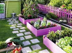 I love the pavers with grass and colored planters with colored fence raised gardens, colors, vegetables garden, paint, garden idea, purple garden, raised garden beds, garden boxes, stepping stones