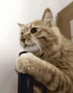 New trendy GIF/ Giphy. cat funny cats vacuum. Let like/ repin/ follow @cutephonecases