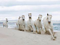 ❥ wild horses