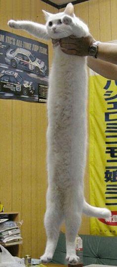 Stretch-arm-cat!