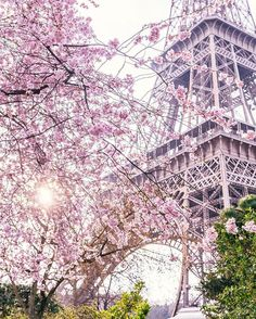"PARIGI | La vie en rose 🌸 - VuTheara Kham (@vutheara) su Instagram: ""Cherry Blossom Girl 🌸 Holidays Around The World, Around The Worlds, Best Summer Holiday Destinations, Tour Eiffel, City Photo, Mexico, Tours, Healthy Recipes, House Styles"