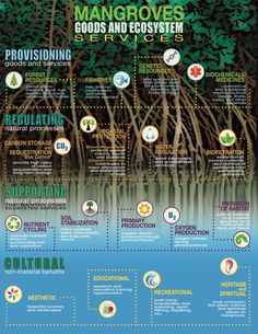 "Mangrove Action Project: Mangrove online course by The Nature Conservancy and the UN University: ""Mangroves Biodiversity and Ecosystem"""