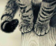 Little cat~
