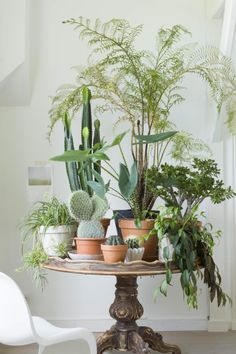 This is total décor goals for me. I love tables full of plants, and it's something that I want to have in my future home. I love this particular mix of ferns and cacti!
