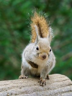 Pardon me, I'm a bit gassy. Must be all those nuts.