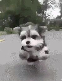 Michael Bay's dog