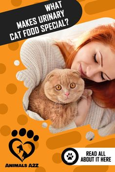 When your cat has urinary problems, you should feed him with a diet high in meat and moisture. Best Cat Food, Dry Cat Food, Information About Cats, Cat Fountain, Cat Diet, All About Cats, Cat Facts, Buy A Cat, Types Of Food
