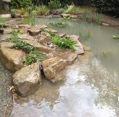 Wildlife Pond in Esher, Surrey by Claudia de Yong Designs Outdoor Ponds, Ponds Backyard, Garden Ponds, River Rock Landscaping, Landscaping With Rocks, Fish Pond Gardens, Garden Pond Design, Pond Water Features, Natural Pond